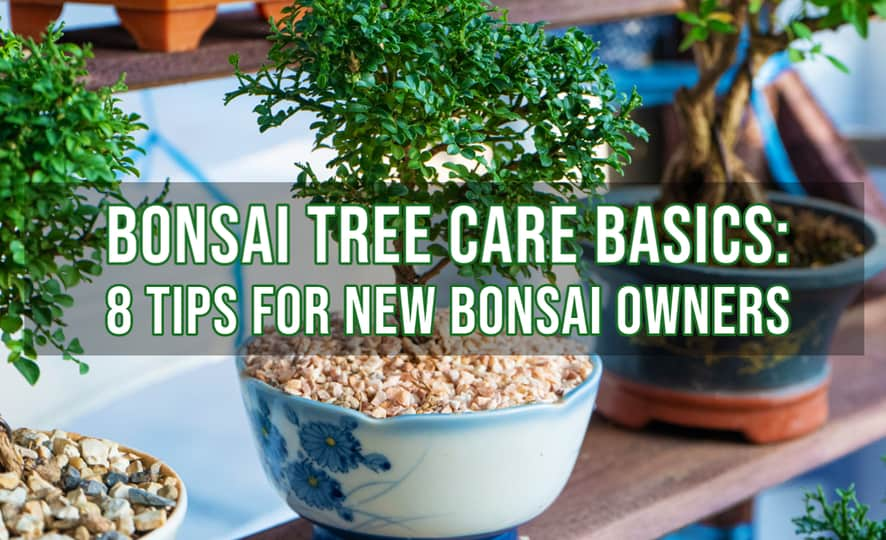 Bonsai Tree Care Basics