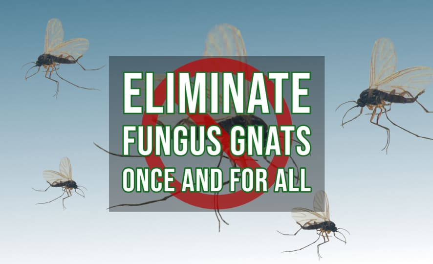 Eliminate Fungus Gnats Once and For All