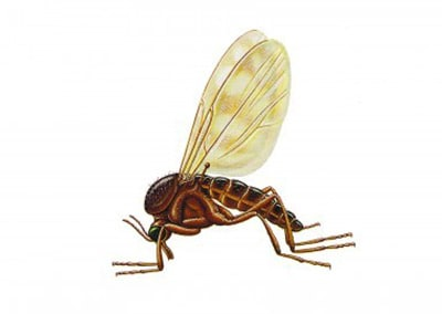Eliminate Fungus Gnats