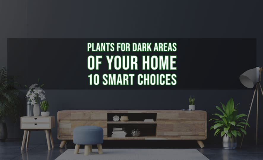 Plants for Dark Areas of Your Home