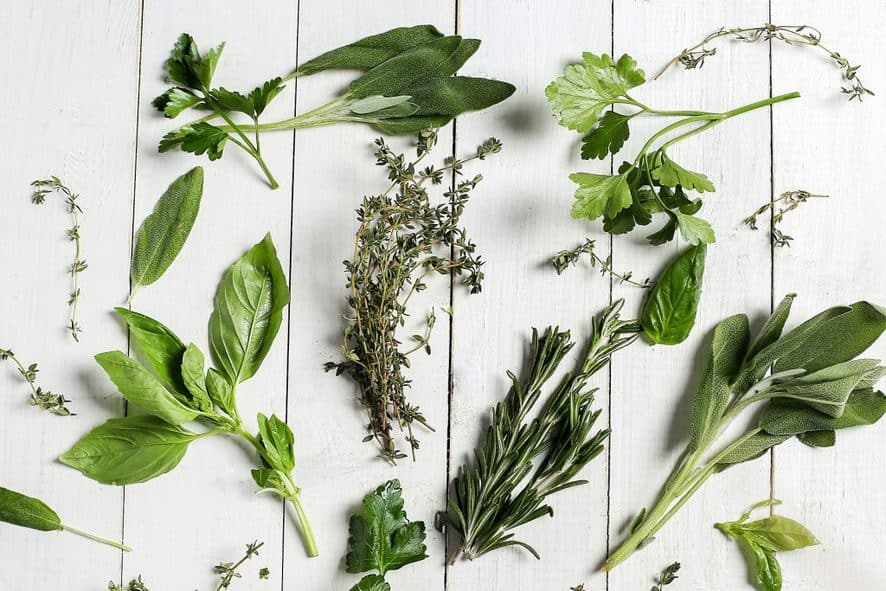 Herbs for Windowsill Gardens