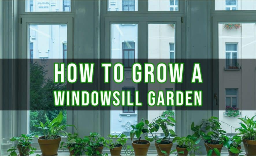 How to Grow a Windowsill Garden