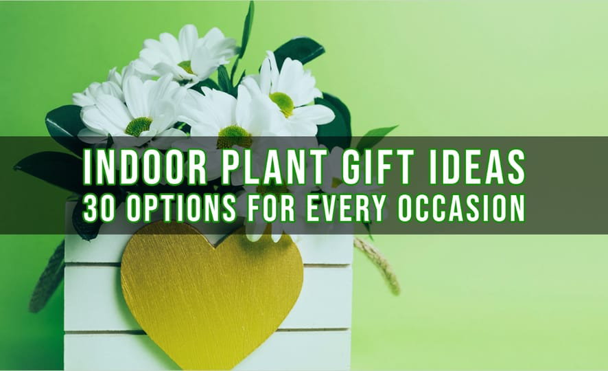 Indoor Plant Gift Ideas – 30 Options for Every Occasion