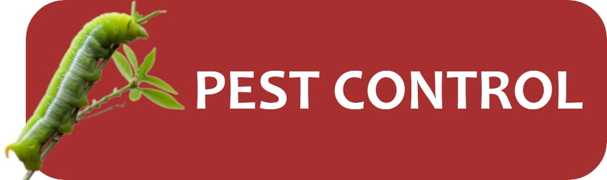 Pest Control Recommendations