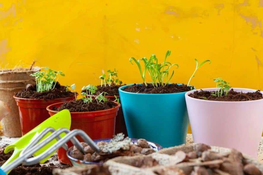 Planting a Windowsill Garden
