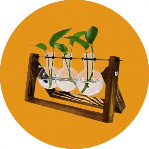 Recommended Indoor Gardening Tools:  Plant Propagation Station
