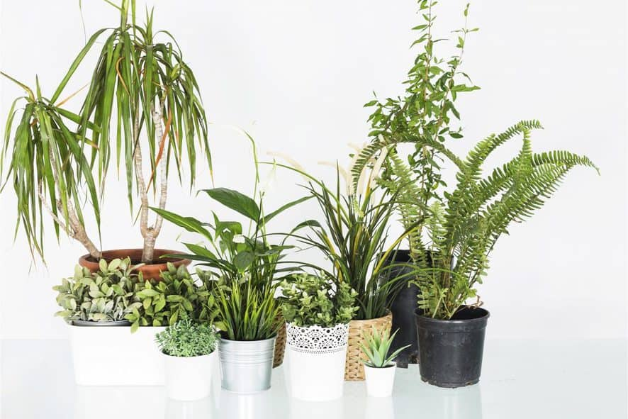 Windosill Garden Containers