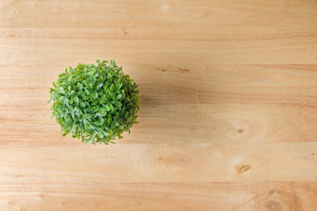 How to Create an Indoor Topiary