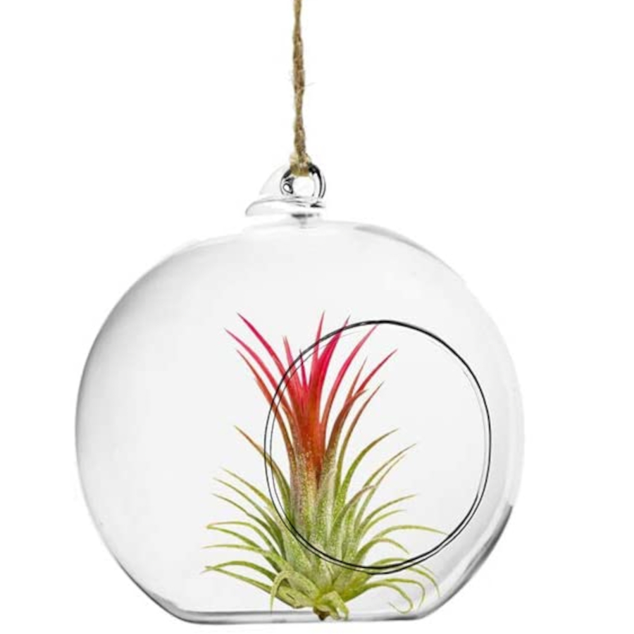 Hanging Glass Container for Air Plants