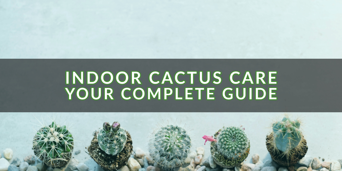 Indoor Cactus Care_ Your Complete Guide