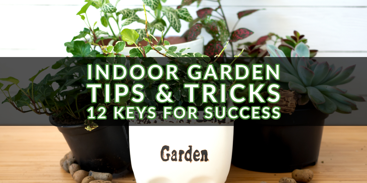 Indoor Garden Tips & Tricks
