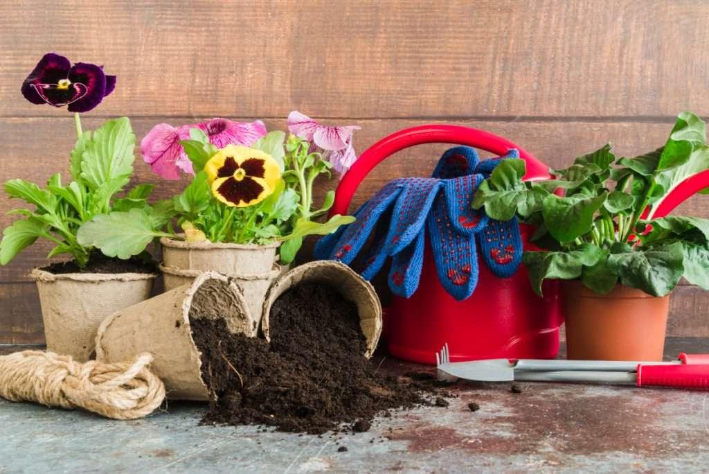 Indoor Garden Tips & Tricks