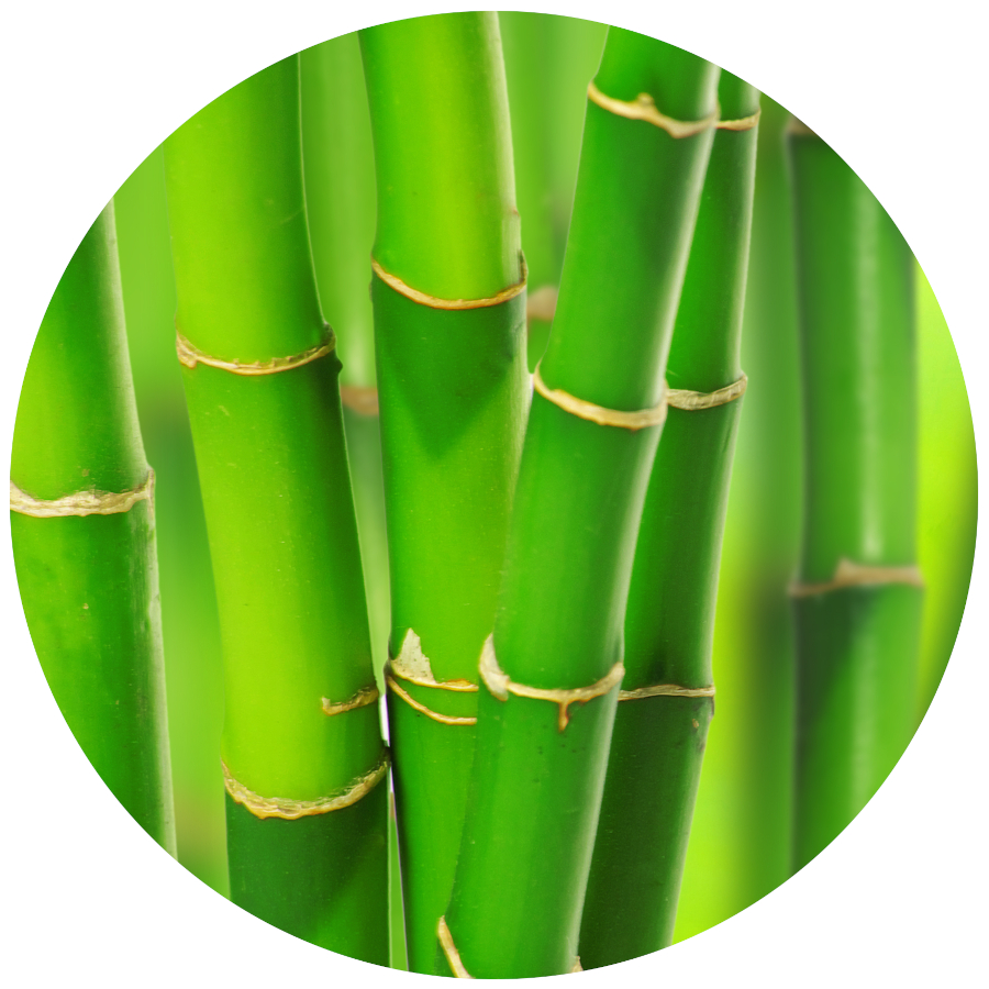 Lucky Bamboo Poisonous for Pets