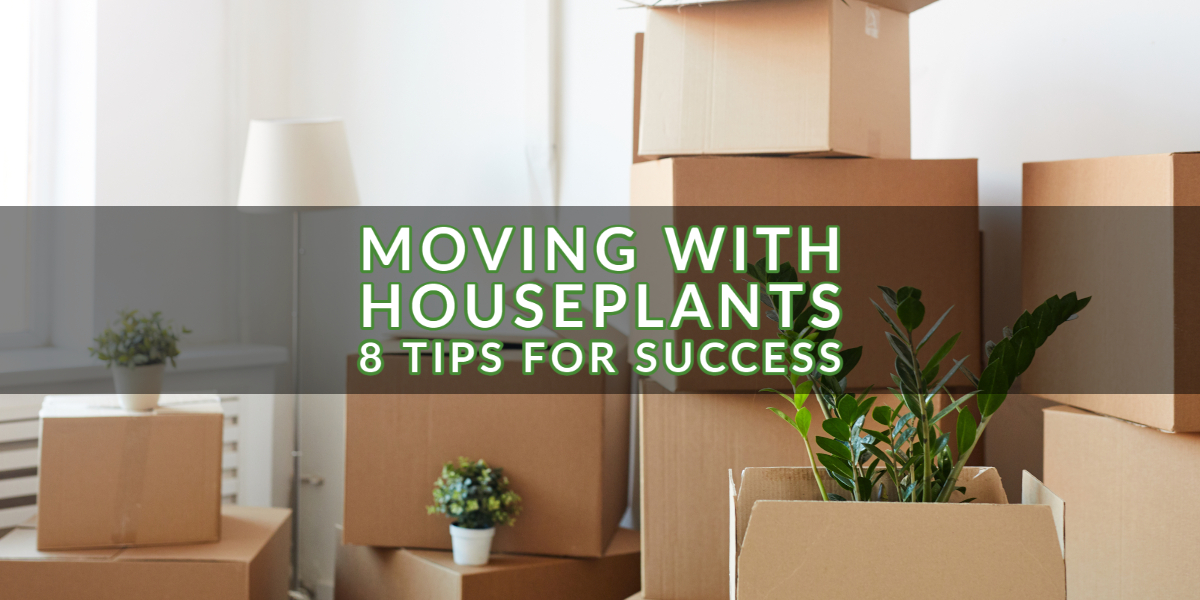 Moving with Houseplants – 8 Tips for Success