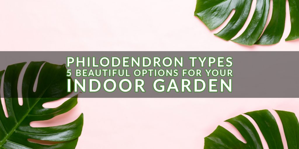 Philodendron Types for Your Indoor Garden