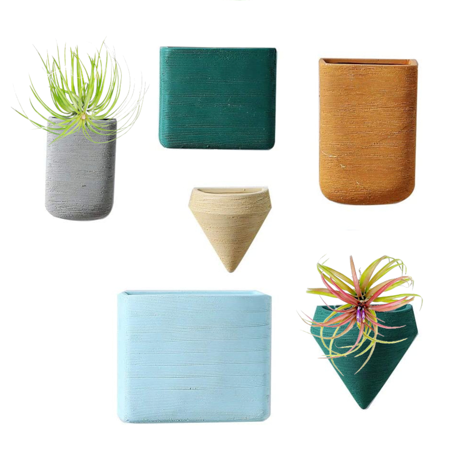 Wall-mounted Containers for Air Plants