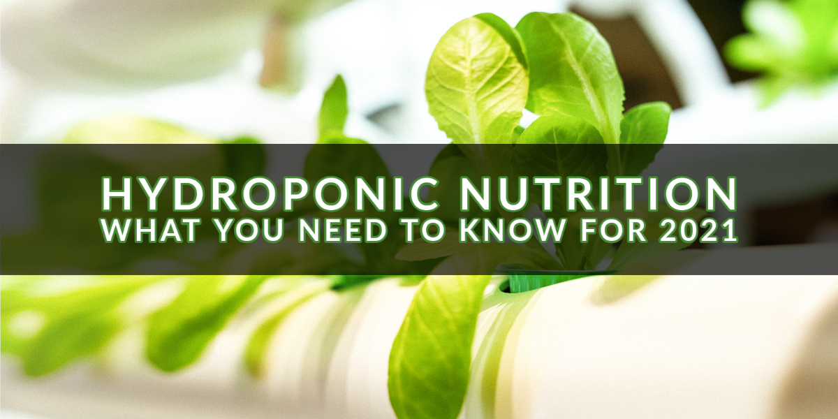 Hydroponic Nutrition - What You Need To Know for 2021
