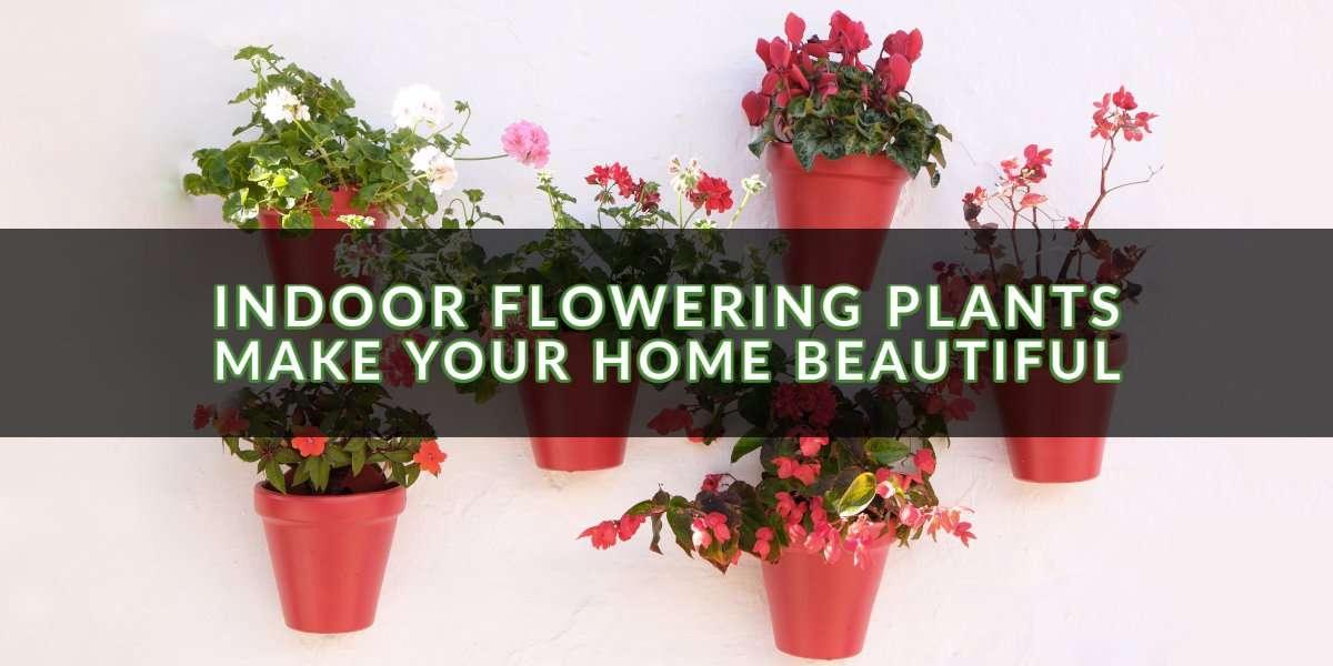 Indoor Flowering Plants_ Make Your Home Beautiful
