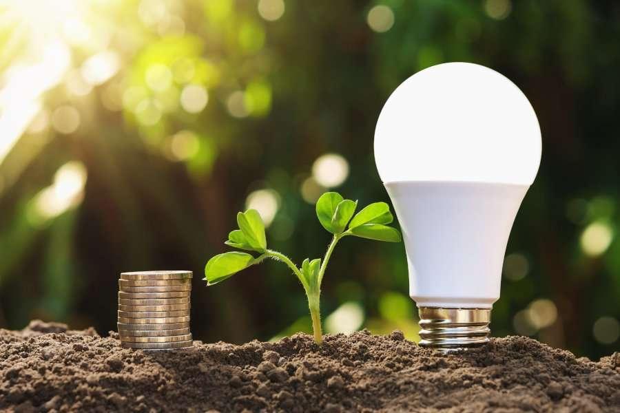 Indoor Grow Lights for Vegetables