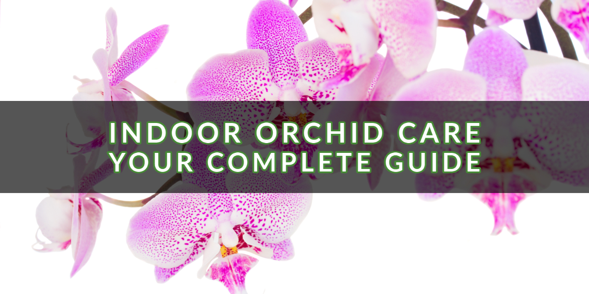 Indoor Orchid Care — Your Complete Guide