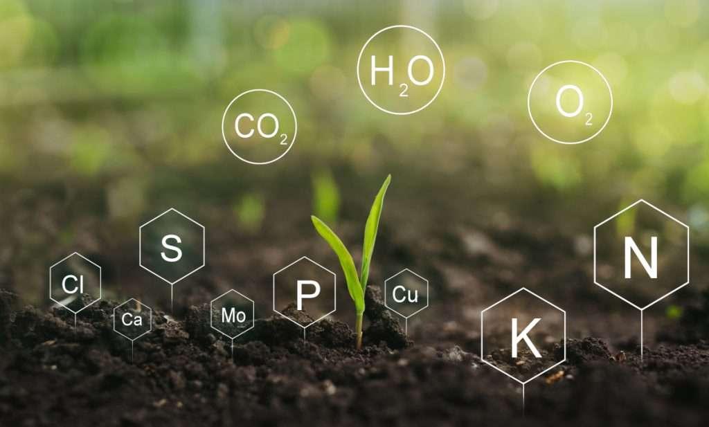 Hydroponic Plant Nutrition