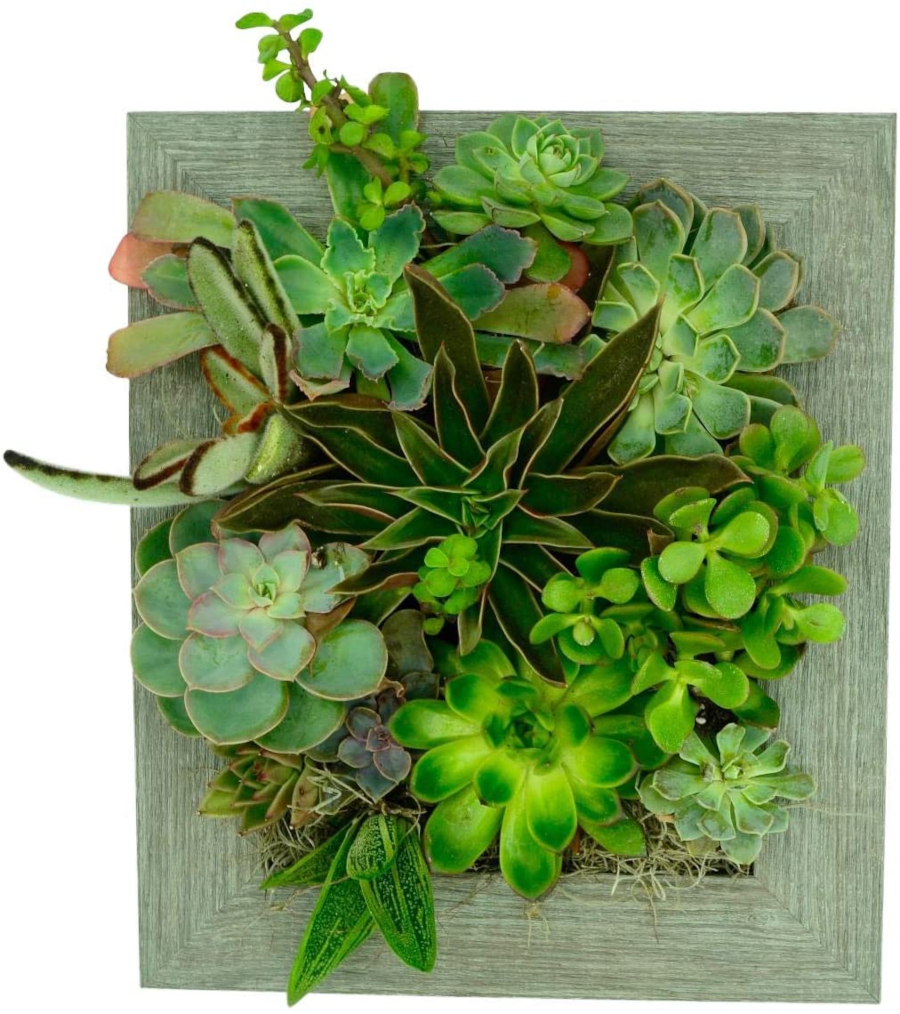 Vertical Garden Frame
