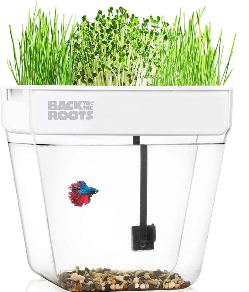 Back to the Roots Herb Garden Kit