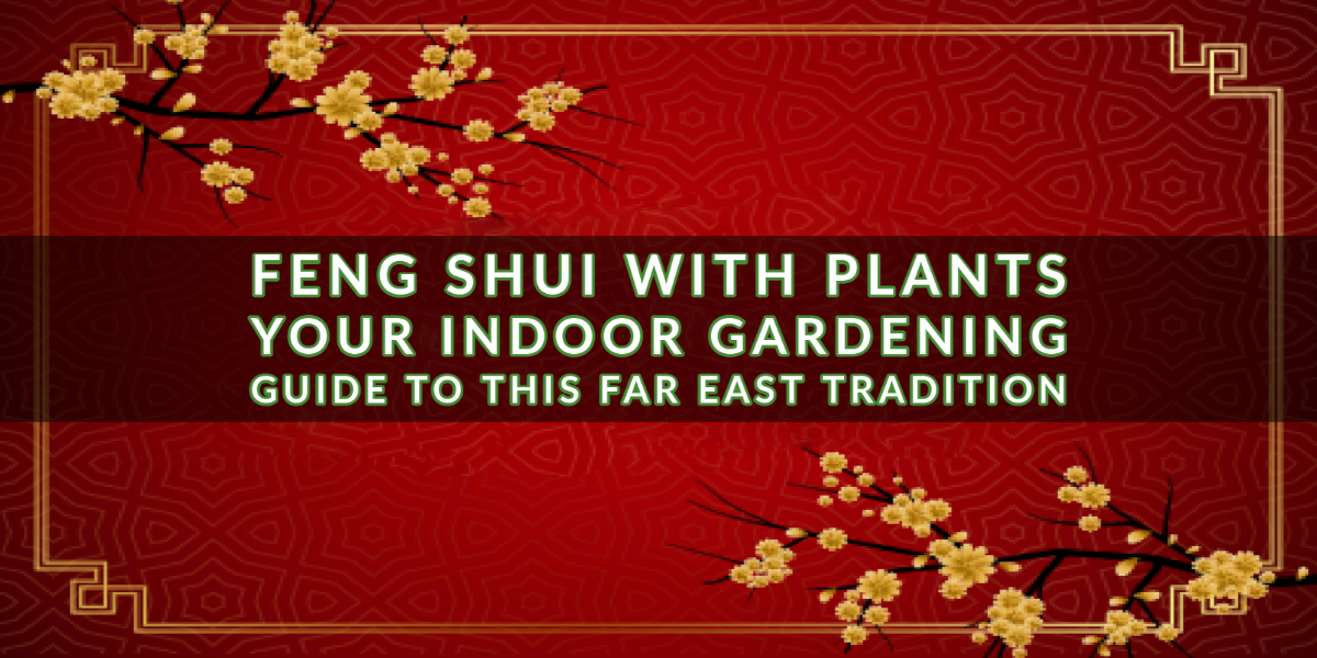 Feng Shui with Plants_ Your Indoor Gardening Guide To this Far East Tradition