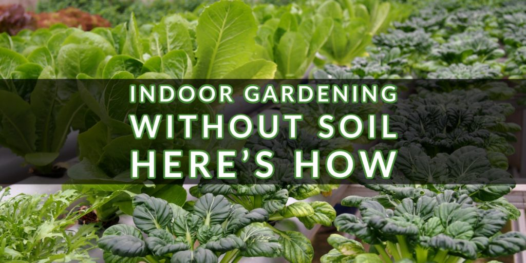 Indoor Gardening without Soil - Here's How