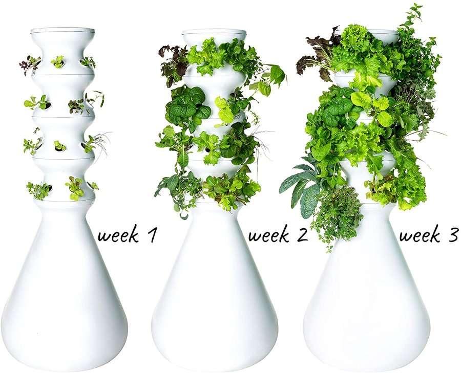 Lettuce Grow Herb Garden Kit