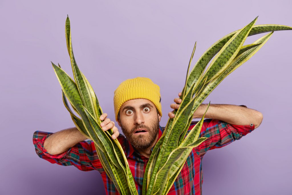 Indoor Gardening Mistake - Not Pruning