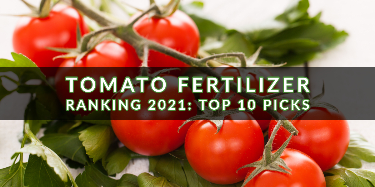 Tomato Fertilizer Ranking 2021_ Top 10 Picks