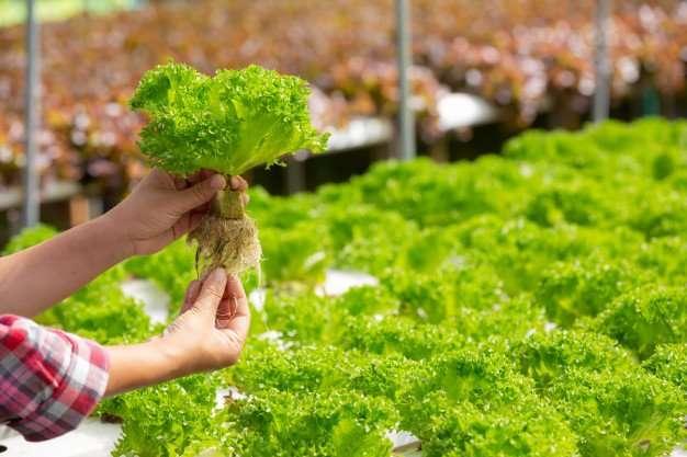 Bigger Harvests Indoor Hydroponic Garden