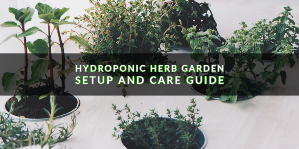 Hydroponic Herb Garden cover