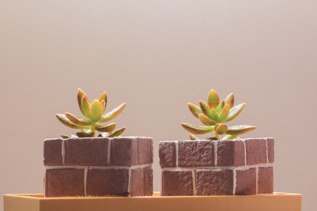 Oasis Cubes Indoor Hydroponic Garden