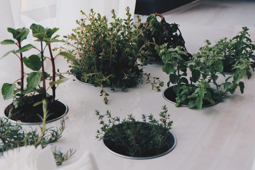 hydroponic herb garden