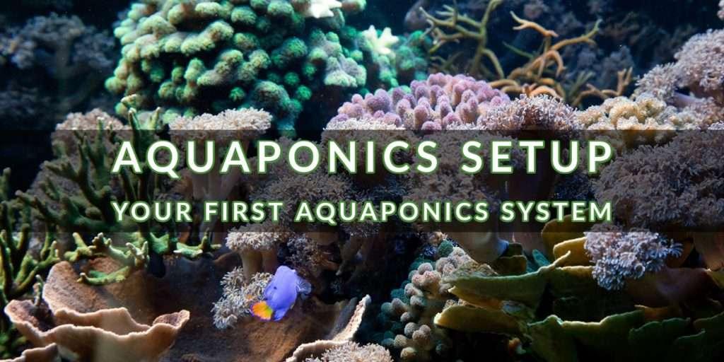 Aquaponics Setup: Your First Aquaponics System