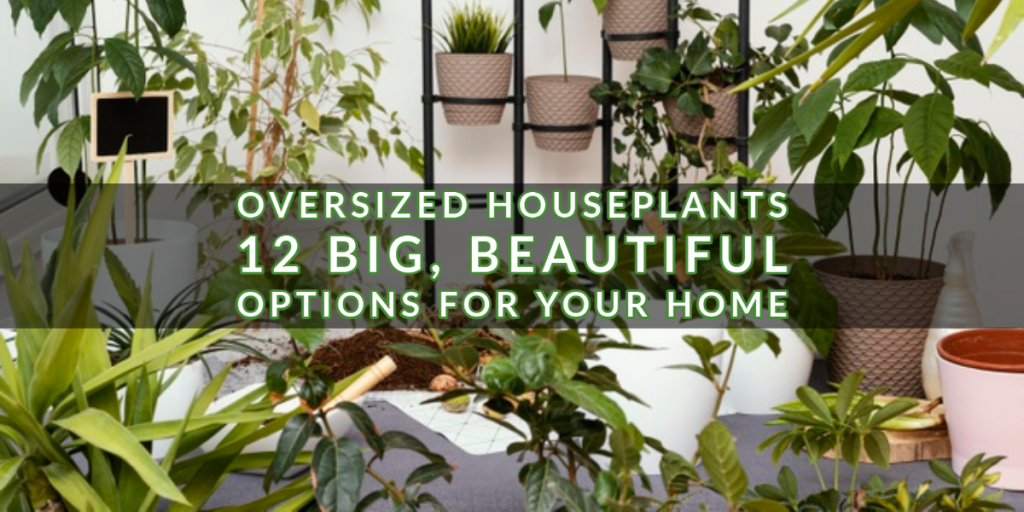 Oversized Houseplants