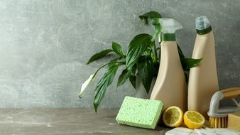 Get Rid of Mealybugs soap