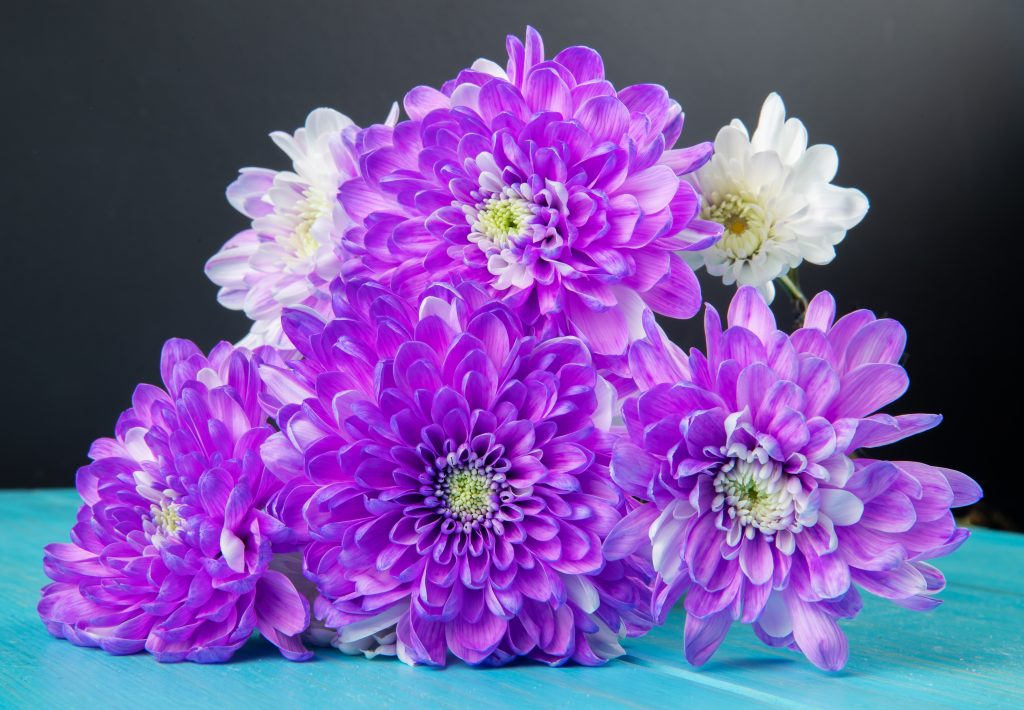 Violets for Indoor Gardening - side view