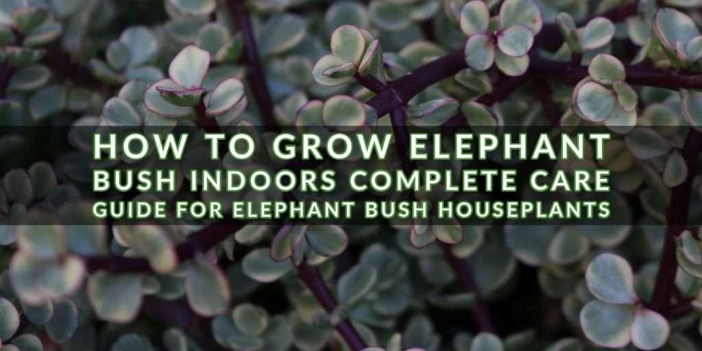 elephant bush cover