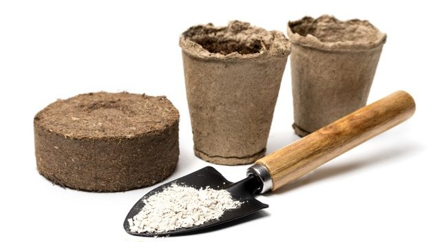 Keep Your Indoor Palm Plant Fertilized