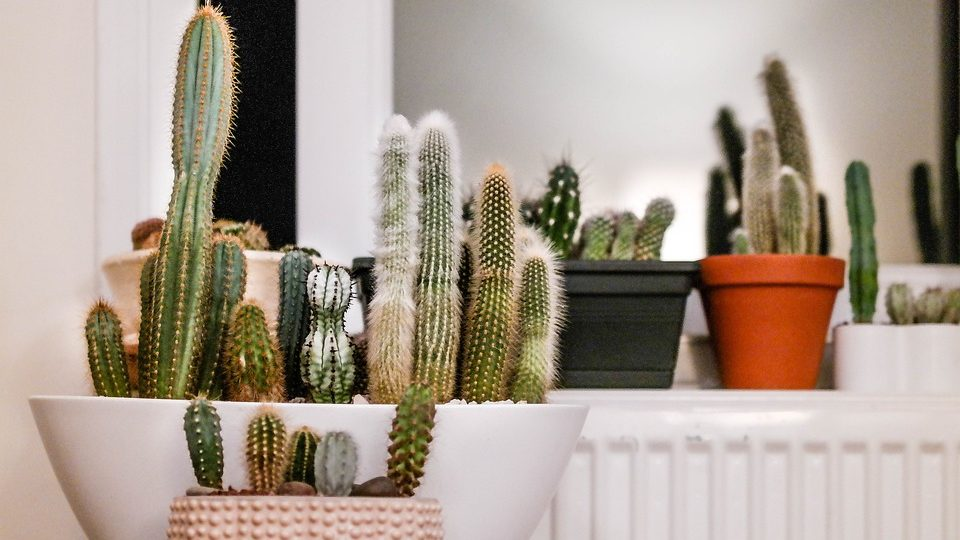 How Long Does It Take Cactus Plants To Grow?