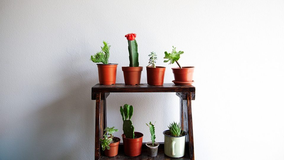 How to Grow Cactus Plants Indoors