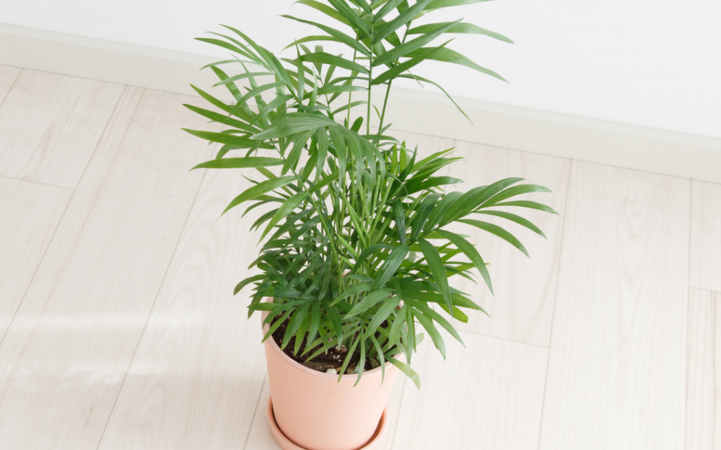 Containers for Indoor Palm Plants