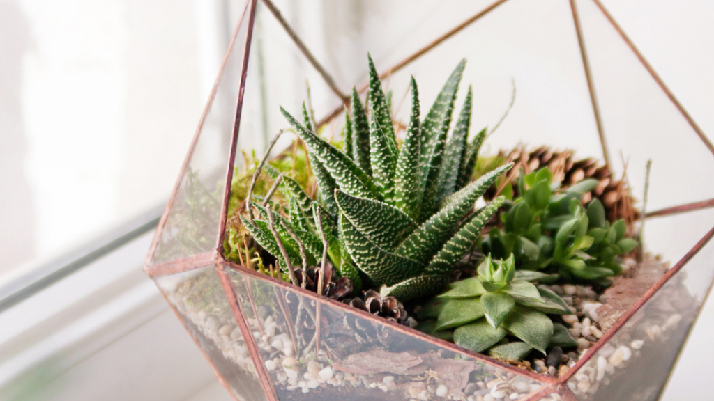 Give Your Succulents Some Space