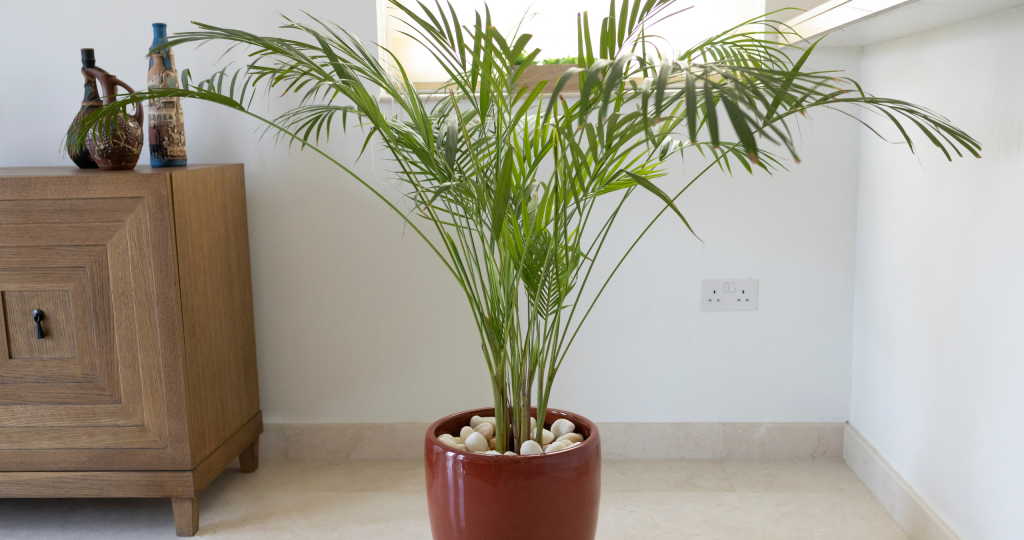 The History of Indoor Palm Trees