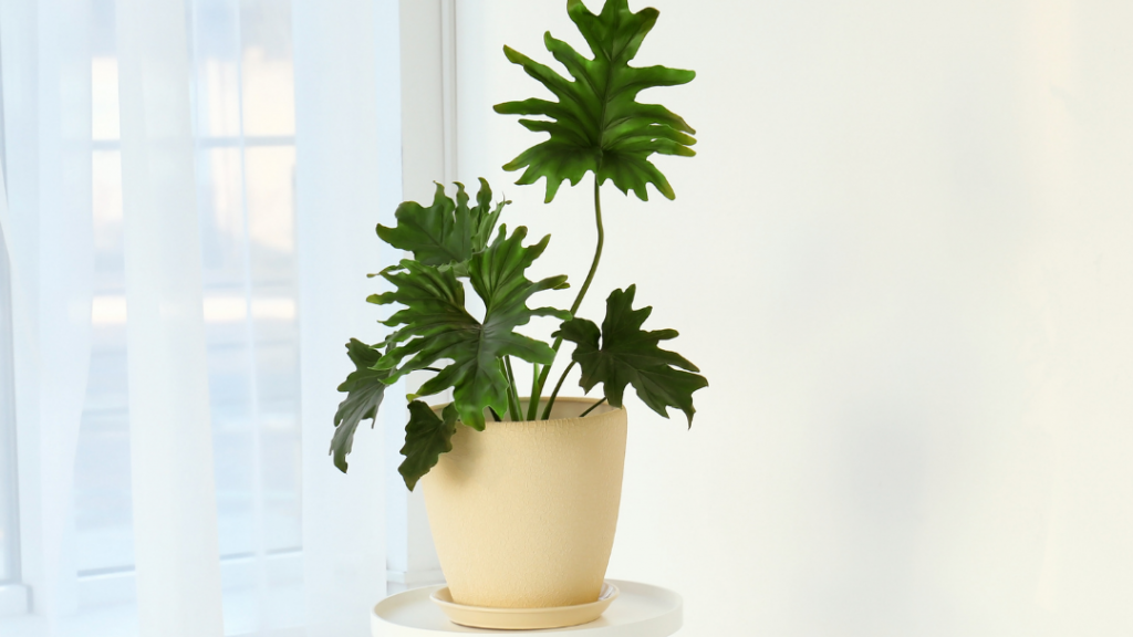 History of Philodendron Plants