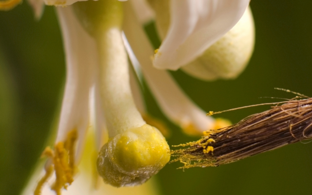 How to Pollinate an