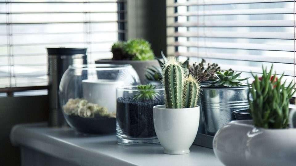 Ideal Temperature for Cacti